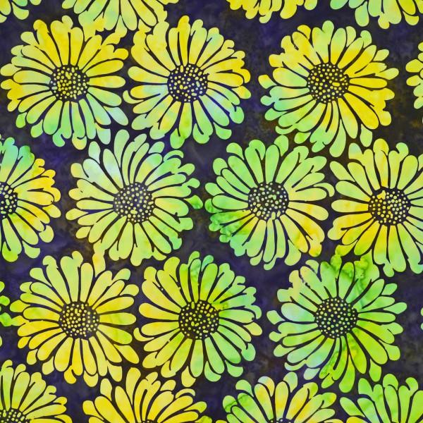 GN-8-9739 Citronelle