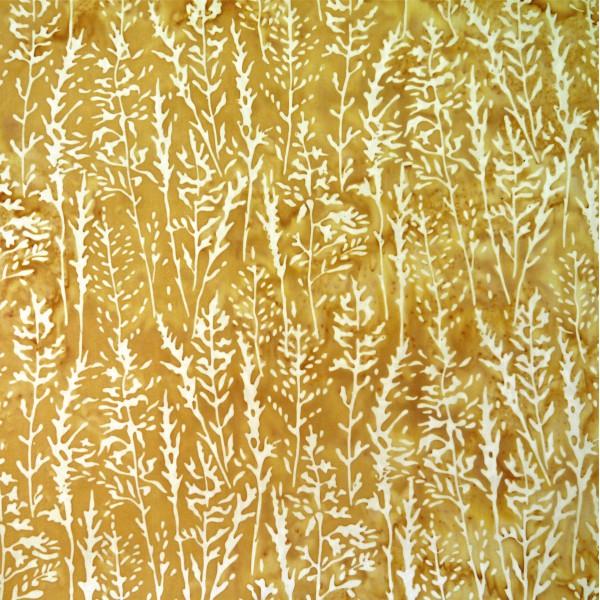SD-9-9263 Crema Corn