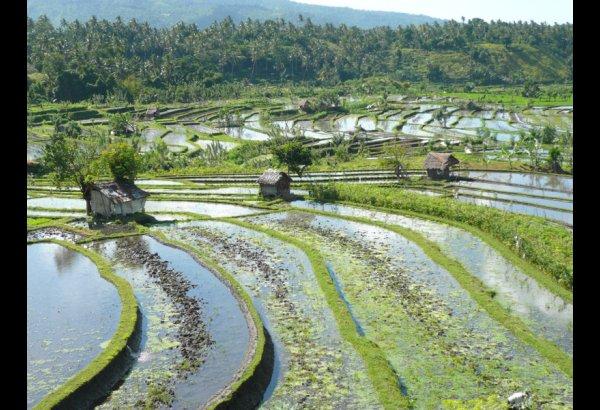 tirta-gangga-water-palace-bali-16