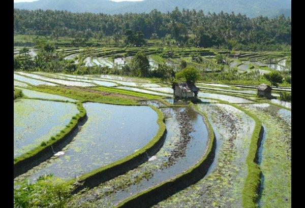 tirta-gangga-water-palace-bali-17