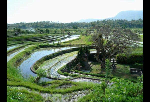 tirta-gangga-water-palace-bali-19